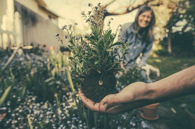 Rostlina, ruka, žena